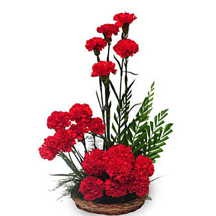 Passionate Love Red Carnation Arrangement